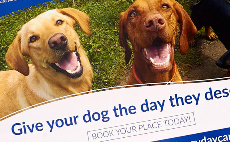 Bruce's Doggy Day Care Leaflets