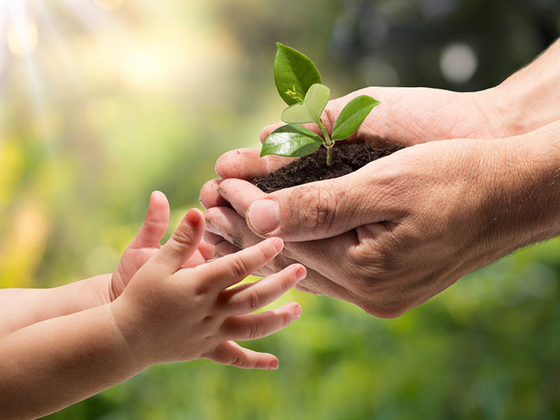 The Environment, green plant in hands passing t child's hands